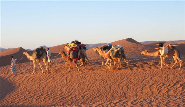 sahara woestijn wandelen met kamelen
